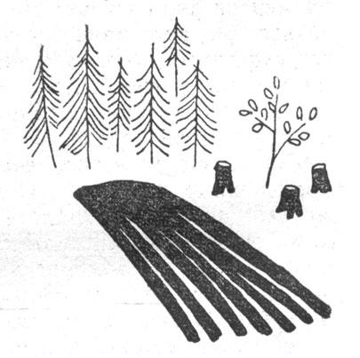 Пашня превратилась в лес